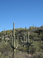 Quesadillas and Saguaro National Park